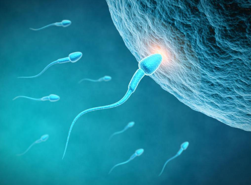 Как определить может ли женщина иметь детей 3