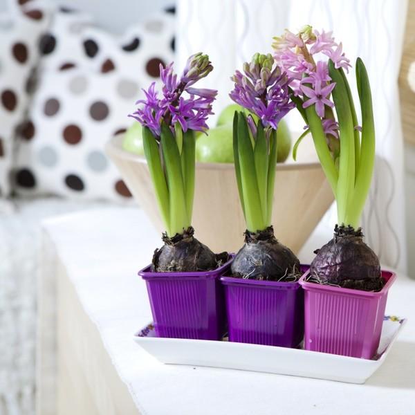 Выращивание цветов на продажу в домашних условиях: бизнес-план, отзывы
