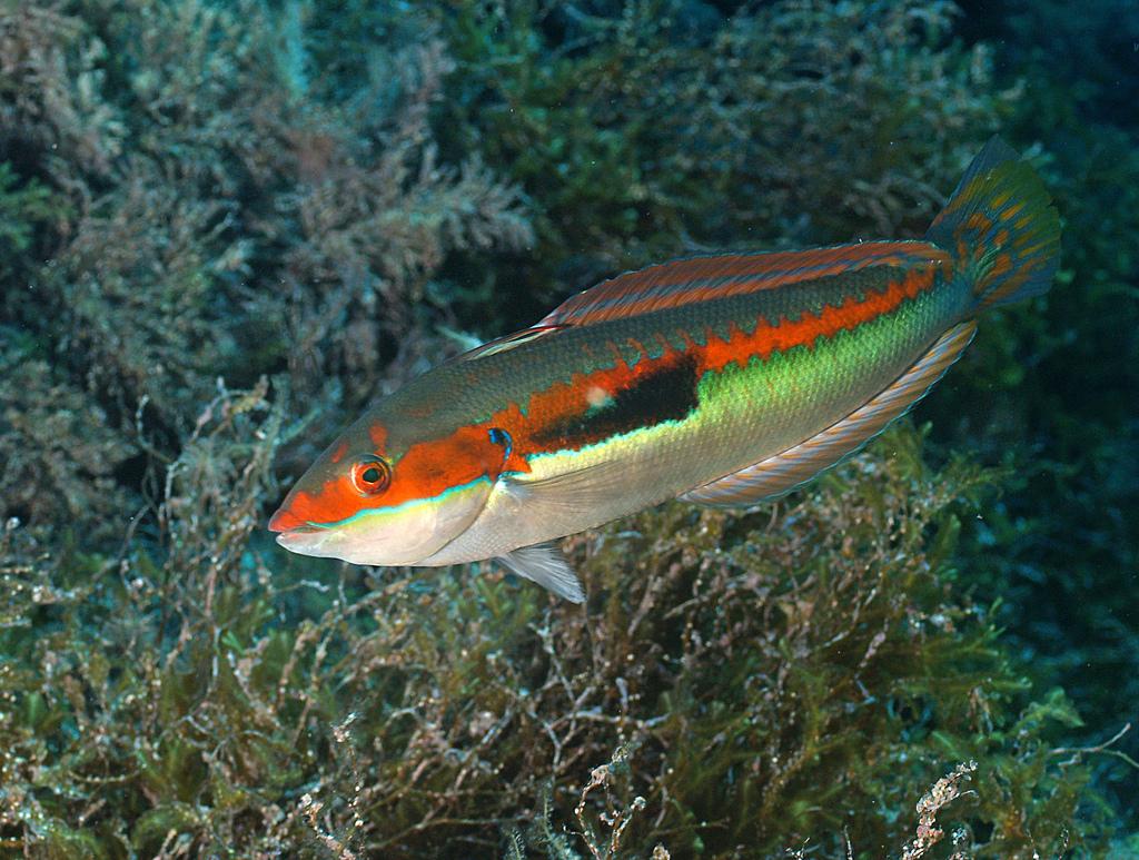 белого рыба черного моря фото и названия рекомендуют иметь своем