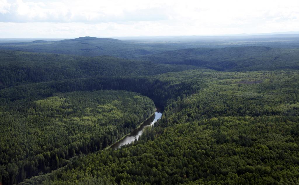 Taiga of the Sverdlovsk region