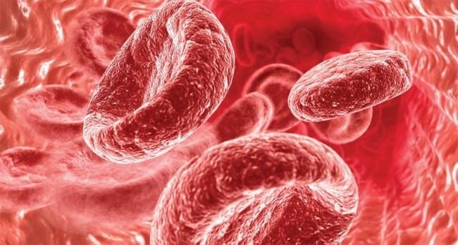 Циркулирующие эритроциты