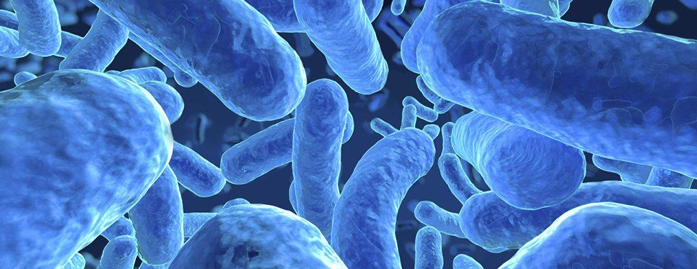 Микроорганизмы - причина неприятного запаха