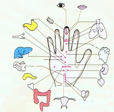 точки органов на руке