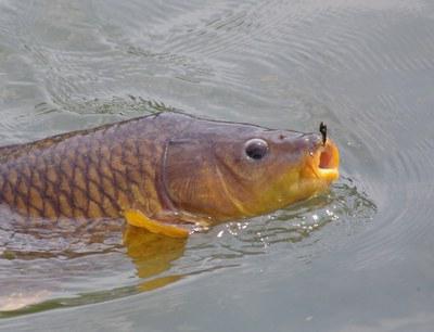 когда лучше клюет рыба утром или вечером