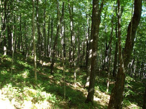 Смешанно широколиственные леса