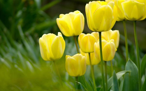 К чему снятся желтые цветы