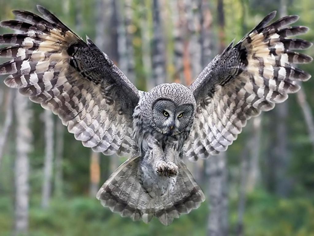 Лесная сова