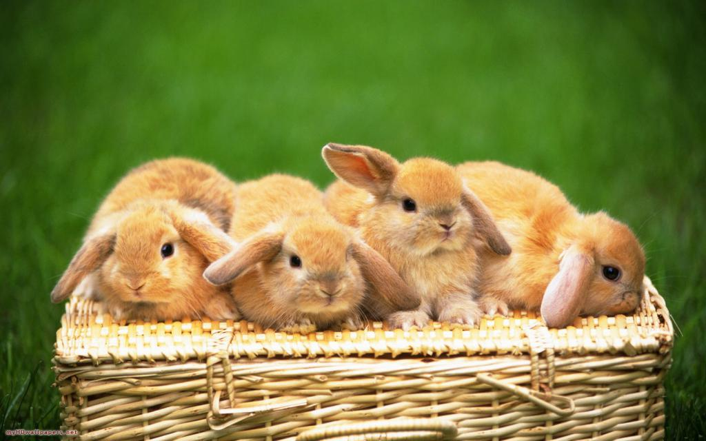 Самые милые кролики картинки много всего список