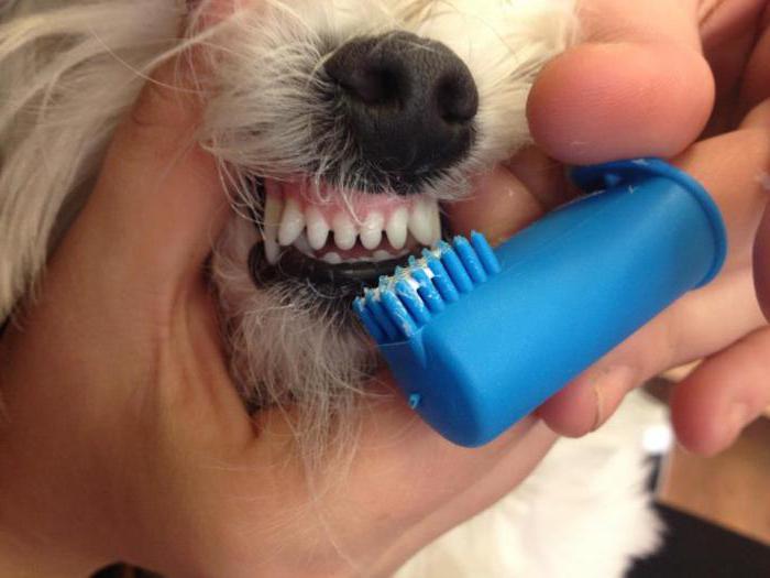 причины запаха изо рта у взрослых хеликобактерии