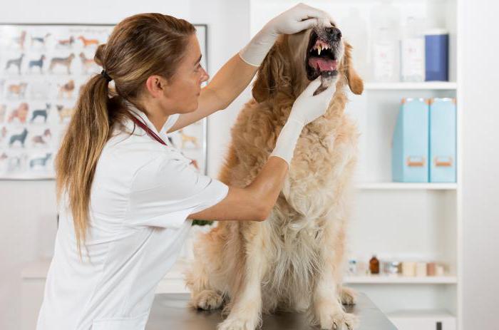 У собаки воняет изо рта что делать