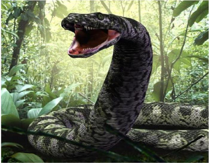 лодка курск титанобоа фото змеи жизни всём тебе