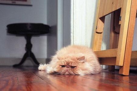 Профилактика мочекаменной болезни у кошек