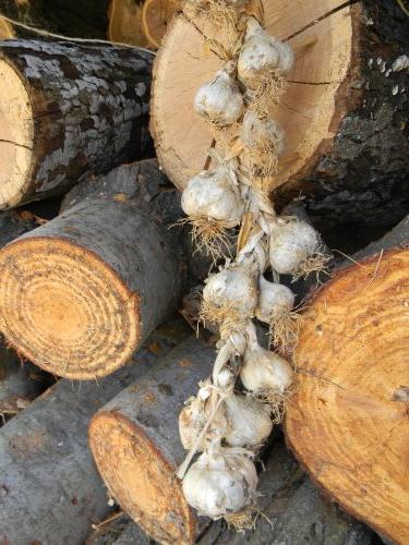 Как сушить корни в домашних условиях