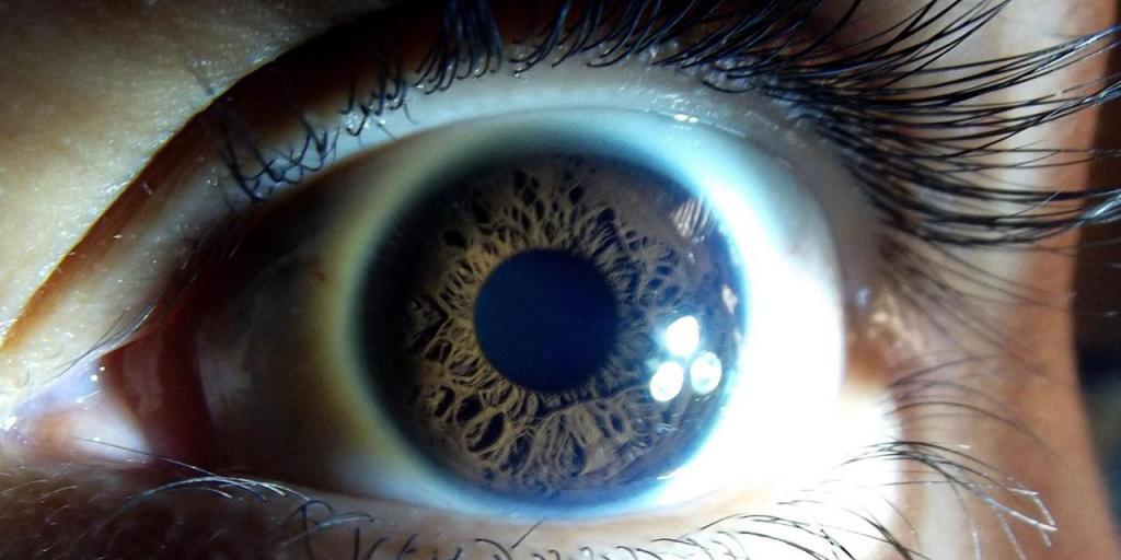 Движения глаз и фазы сна