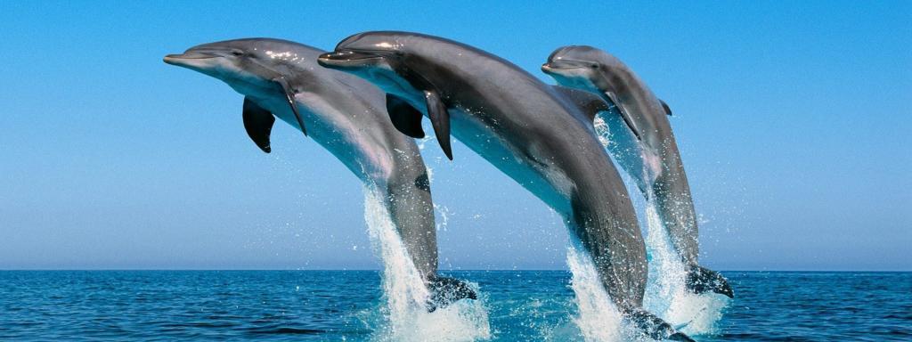 дельфины, выпрыгивают из моря