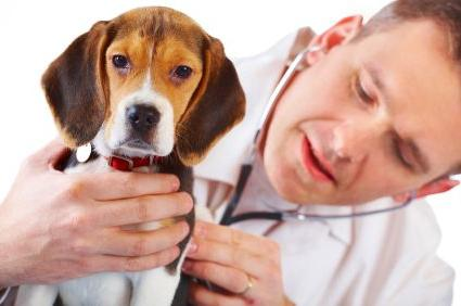 У собаки понос с кровью что делать