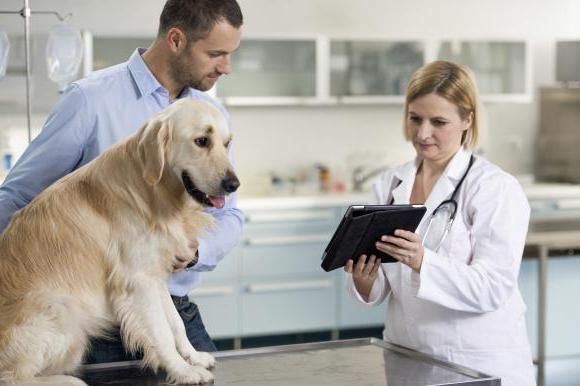 хондропротекторы для собак описание