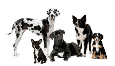хондропротектор для собак