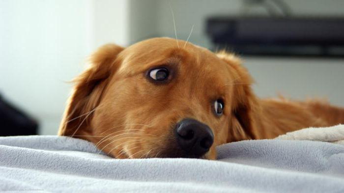 лучшие хондропротекторы для собак