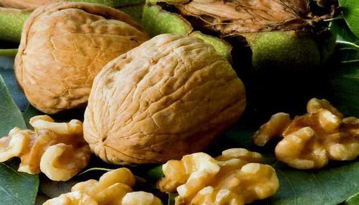 Фото грецкого ореха
