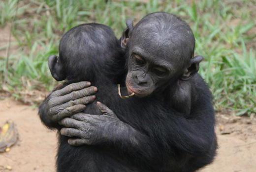 Редкий секс с обезяной шимпанзе
