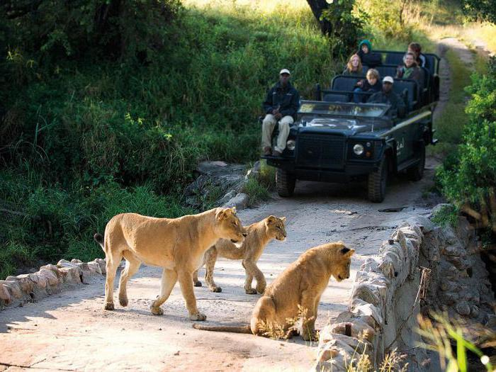 национальный парк крюгер юар
