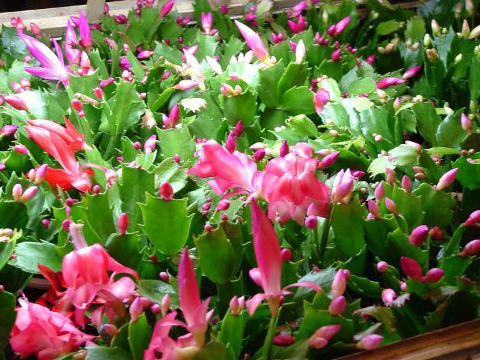какие комнатные цветы можно вырастить семенами