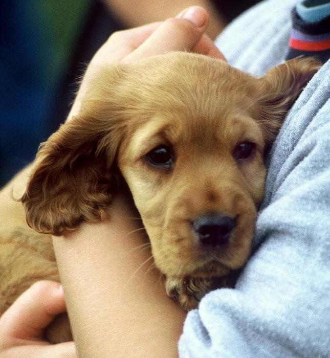 Относится к собакам охотничьих пород