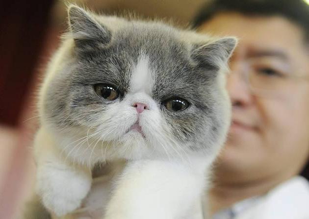 Клички для котов мальчиков Выбираем популярные и