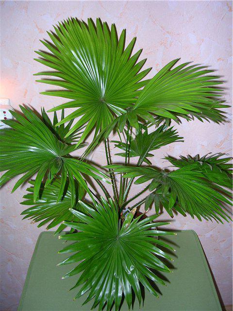 жилкование листа пальмы