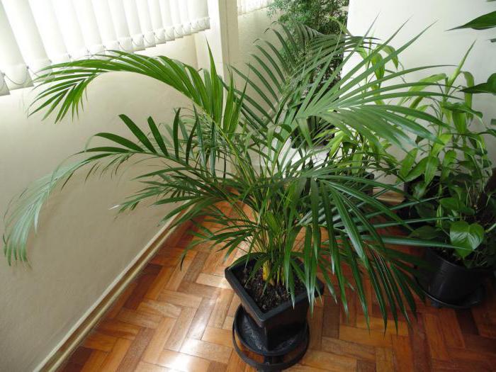 пальмы чернеют листья