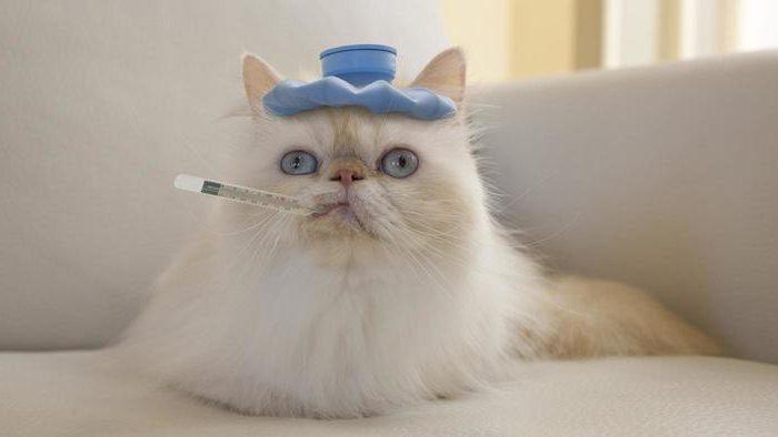 кот как будто кашляет