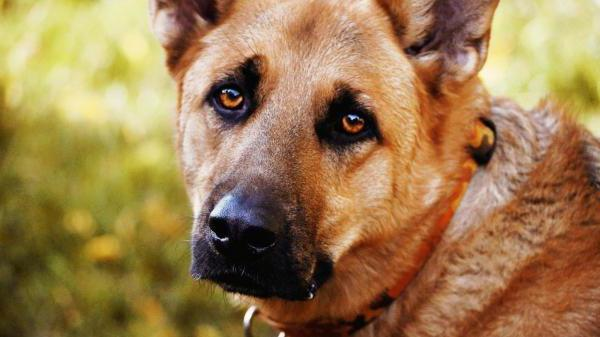 Симптомы и методы лечения дисплазии суставов у собак