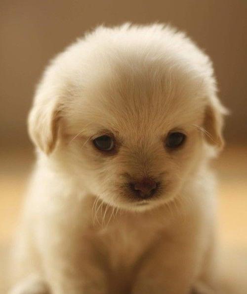 Собачка маленькой породы – ваш