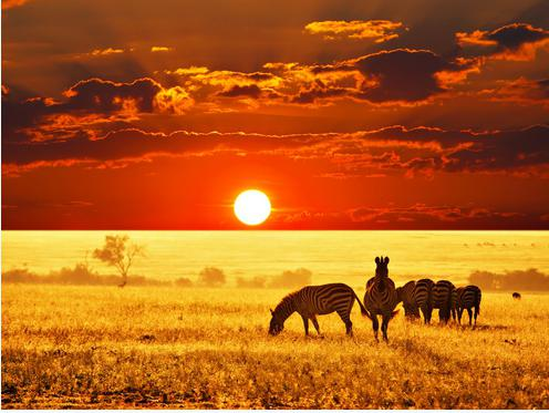 животные африки саванны