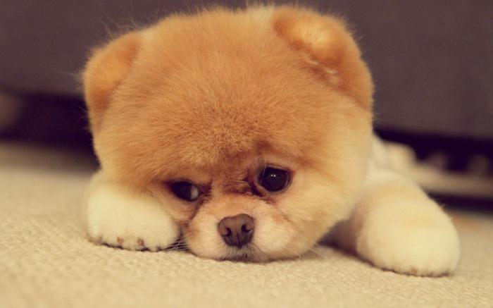 фото маленьких домашних собак