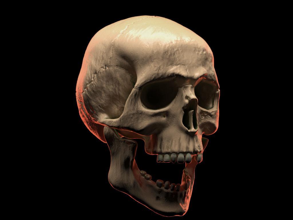 картинки череп человек так много времени
