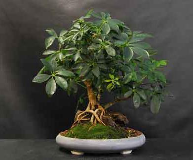 http://fb.ru/misc/i/gallery/10530/158225.jpg