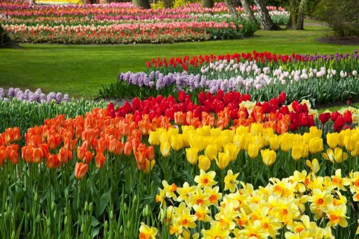 То какие цветы цветут все лето