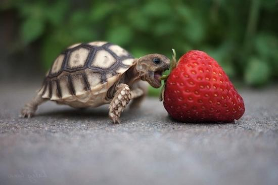 Pin What Do Baby Box Turtles Eat on Pinterest