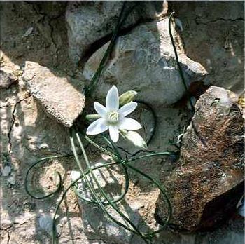 Читать краткое содержание а.п.платонов неизвестный цветок