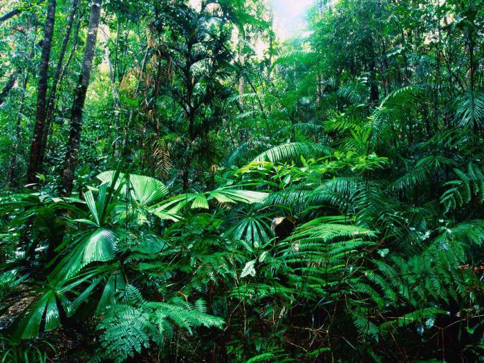где растут тропические леса