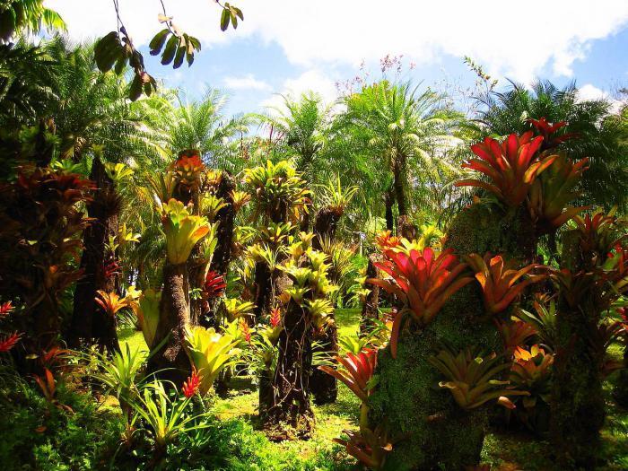 является картинка тропического леса с цветами леса что пляж