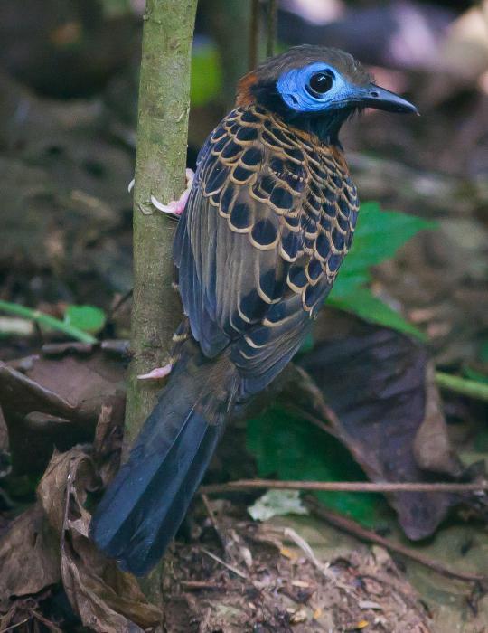 тропический лес фото
