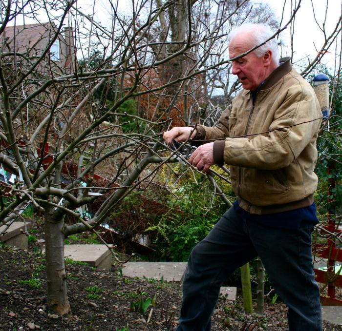 вредители яблони весной