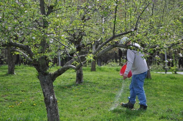 яблонями молодыми весной