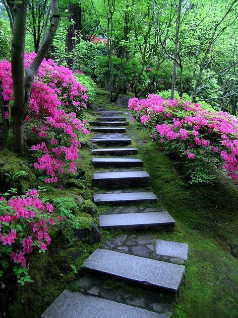 Цветущие кустарники для дачи - названия и фото растений 78
