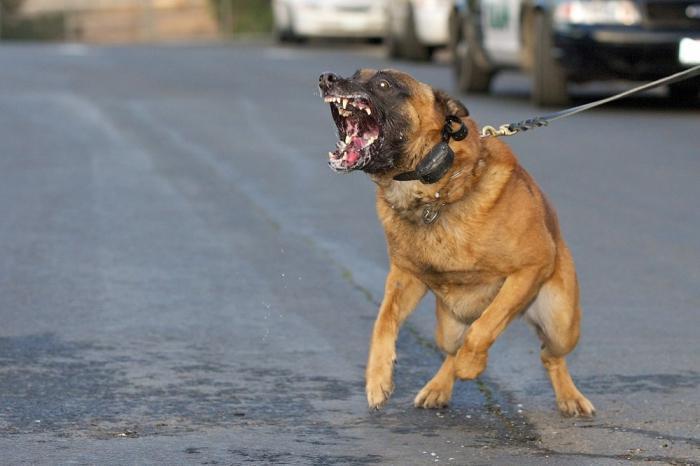 если укусила знакомая собака что делать