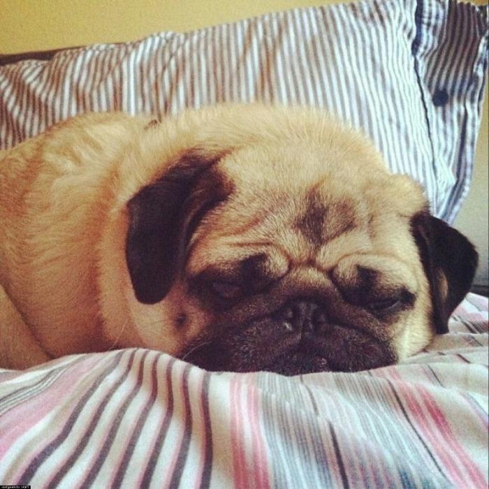 Спать хочу