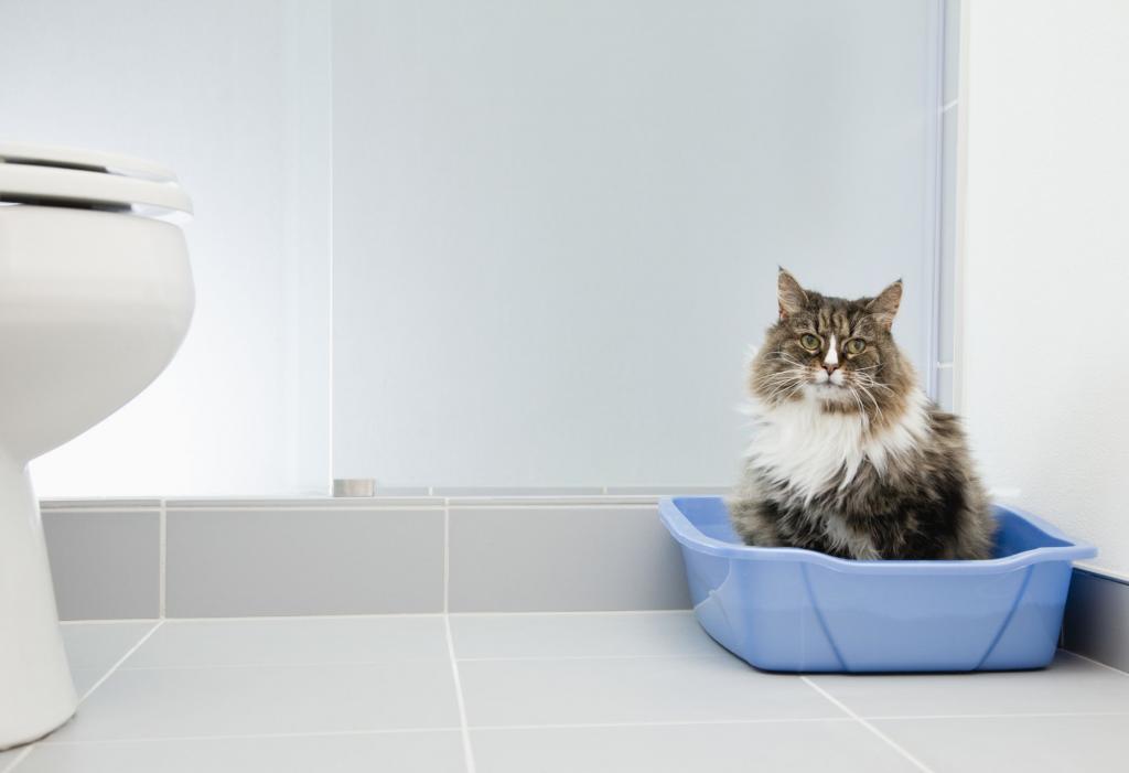 Почему кошки ездят на попе: причины, симптомы, варианты лечения